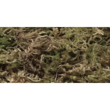 fibra de musgo para nidos