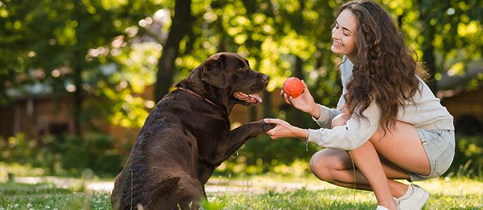 Tipos de antiparasitarios para perros