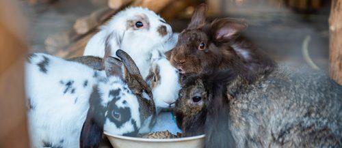 consejos para limpiar la jaula de tu conejo