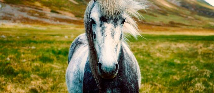 alimentación para caballos con piensos pavo