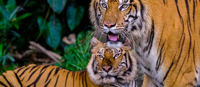 Curiosidades sobre animales salvajes
