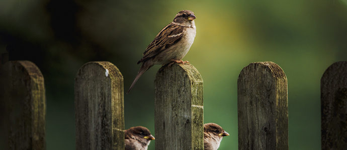 Curiosidades sobre aves