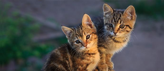 Curiosidades sobre gatos con Agroanimal