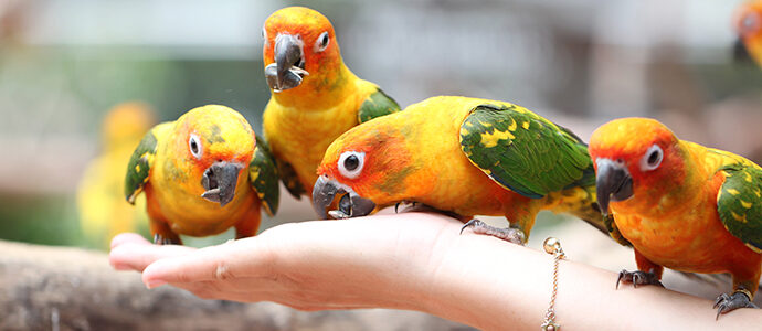 Ofrece una dieta equilibrada a tus pájaros con Agroanimal