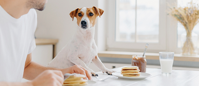 Recetas de snacks para perros caseros