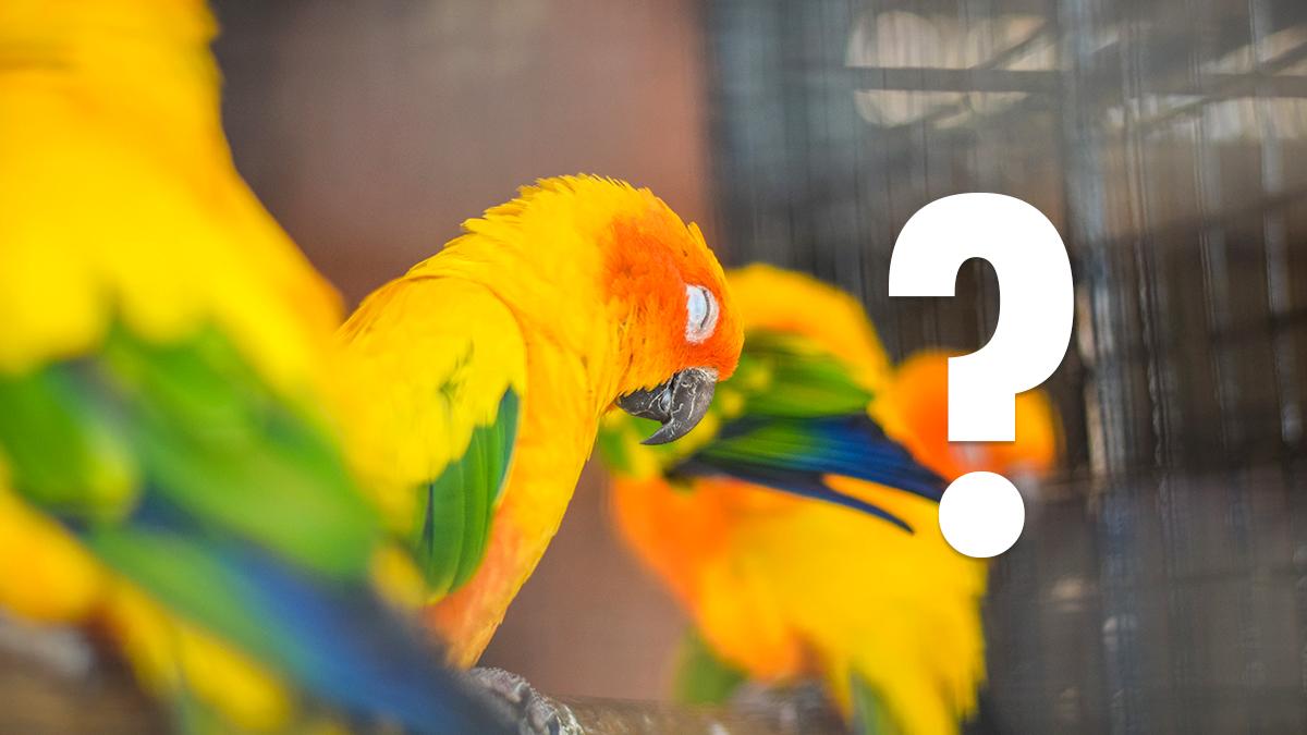 Cómo conocer el sexo de un pájaro