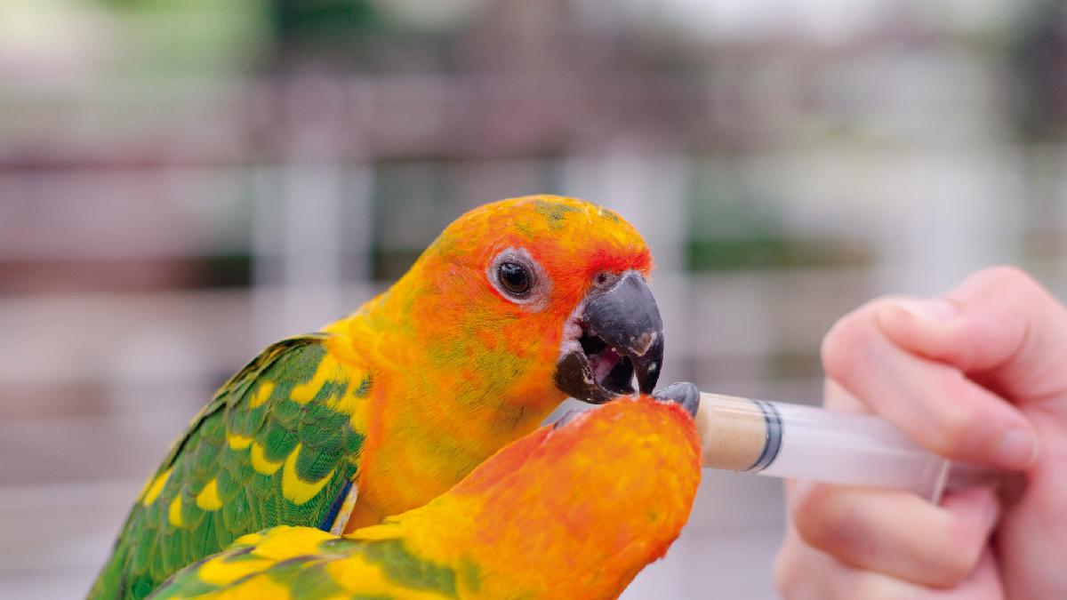 Medicamentos naturales para aves
