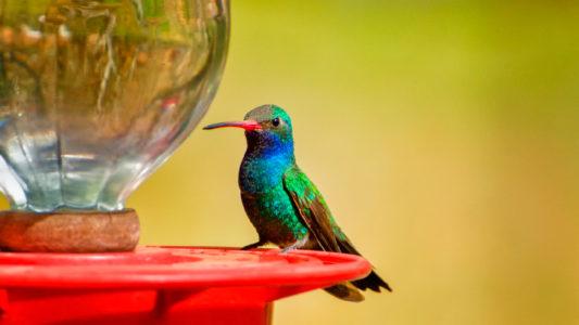 Tipos de bebederos para pájaros