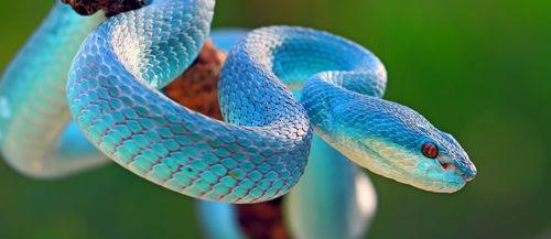 ¿Sabías estas 5 curiosidades sobre reptiles?