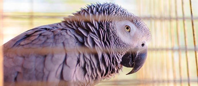 Guía para elegir la mejor jaula para un pájaro