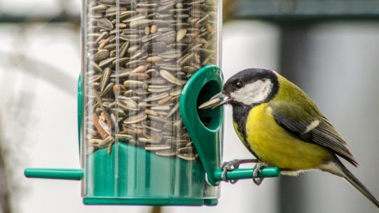 Cómo alimentar a un pájaro
