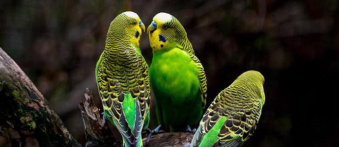 Semillas y mixturas para canarios y periquitos