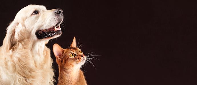 6 consejos para cuidar a tu mascota en verano