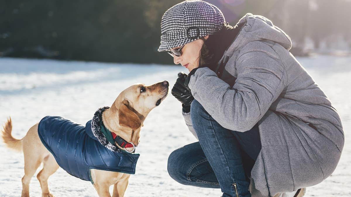 5 noviembre cambios temperatura perros blog