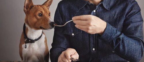 ¿Los perros pueden comer jamón?