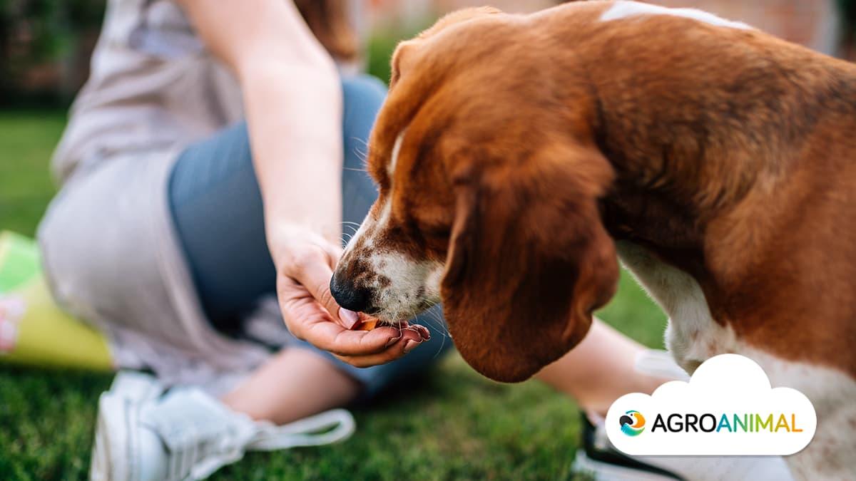 Qué puede comer mi perro