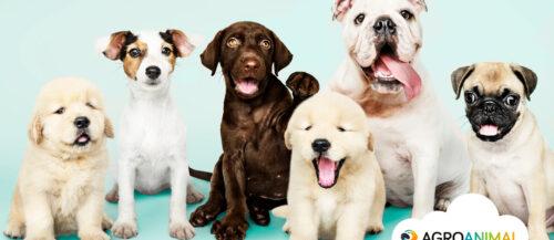 Los 5 parásitos más comunes en perros
