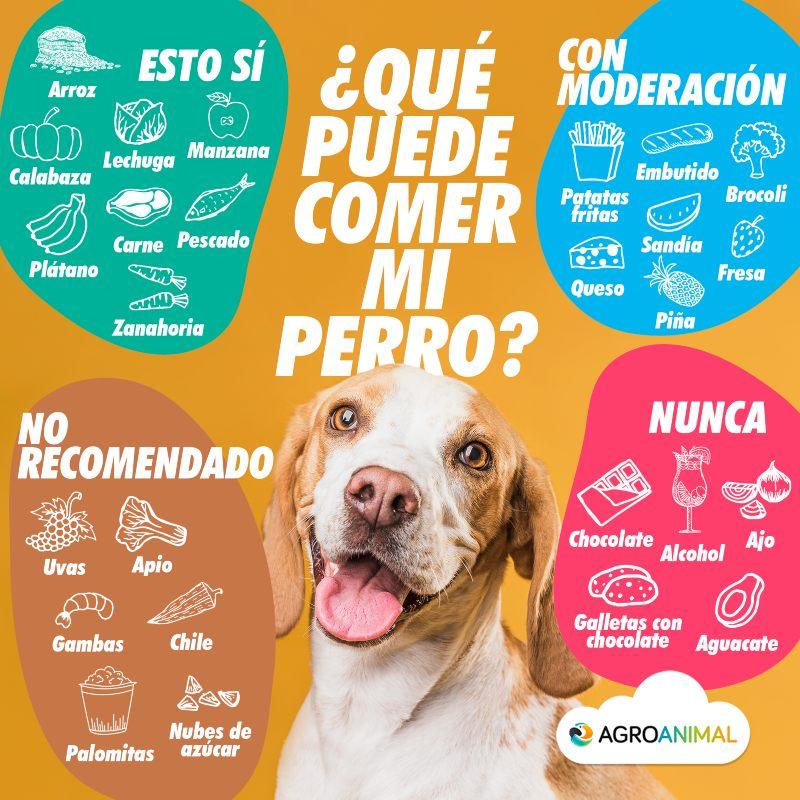 infografia que puede comer mi perro agroanimal