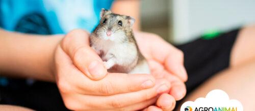 10 curiosidades sobre roedores