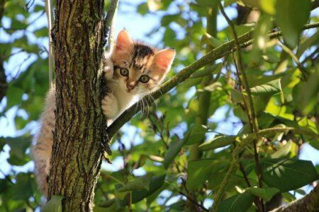 como cuidar gato verano 2