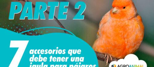 7 accesorios que debería tener una jaula para pájaros (Parte 2)