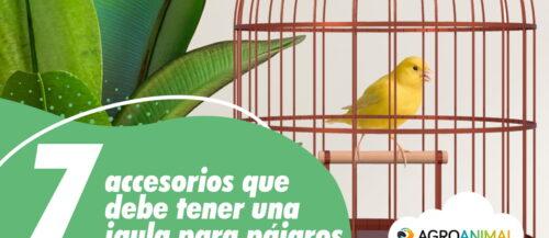 7 accesorios que debería tener una jaula para pájaros (Parte 1)