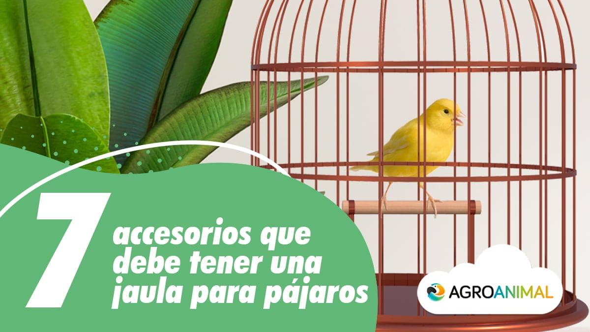 7 accesorios jaula para pájaros