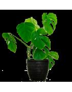 Productos para el cuidado del jardín. Venta online