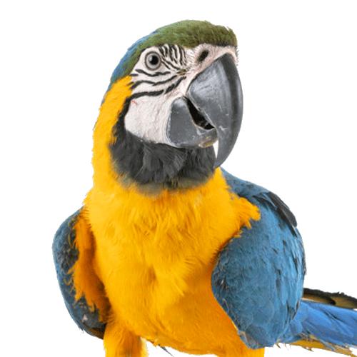 Ofertas Aves