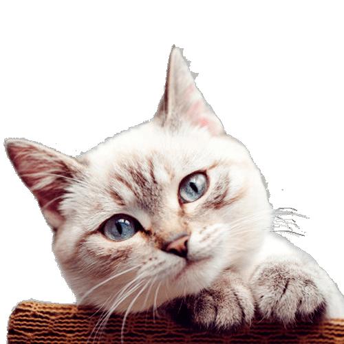 Ofertas Gatos