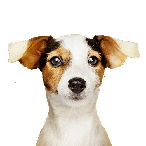 Ofertas perros