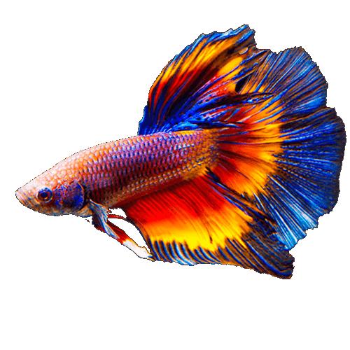 Ofertas peces